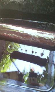 上から見た2液型塗料
