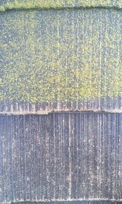 屋根の苔の高圧洗浄